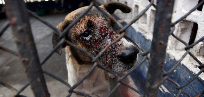 Obtuvo dictamen un proyecto de nueva ley contra el maltrato animal
